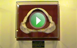 Visit the Aurora Fossil Museum for a Good Time!