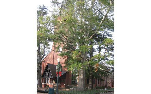 Christ Church New Bern NC