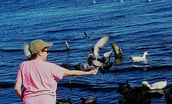Feeding birds at Union Point Park