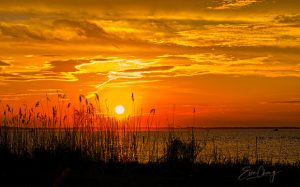 Corolla Sunset by Evie Chang Henderson