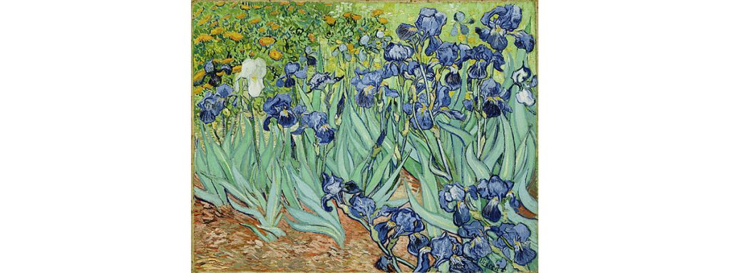 Irises by Vincent van Gogh 1889