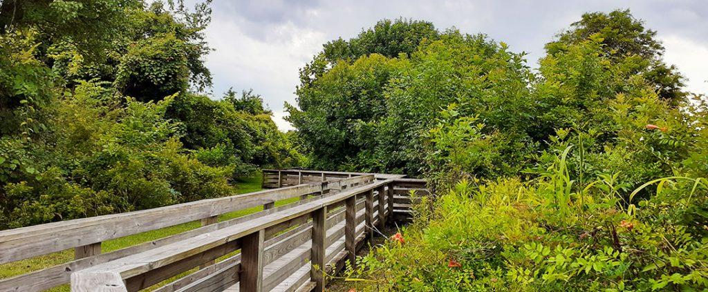 Boardwalk at Lawson Creek Park