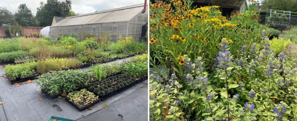 Beds of flowers and plants