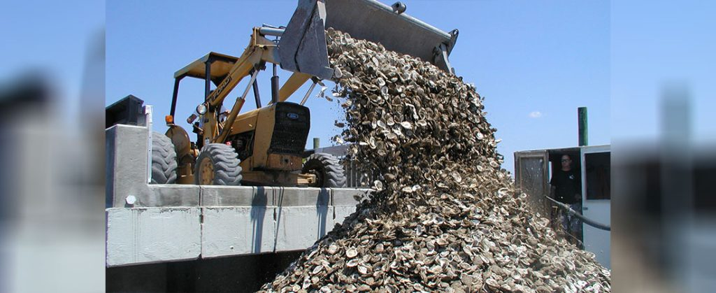 Recycling Oyster Shells for Reefs in Ocean NC