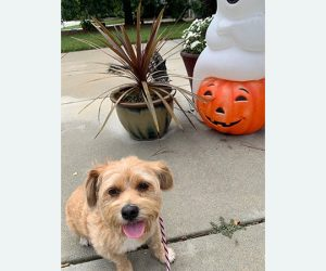 Keep your pets safe during halloween